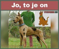Film Games, Anime Films, Scooby Doo, Funny Jokes, Funny Pictures, Lol, Humor, Random, Memes