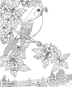 flower Page Printable Coloring Sheets   ... mi state bird and flower state bird robin state flower apple blossom