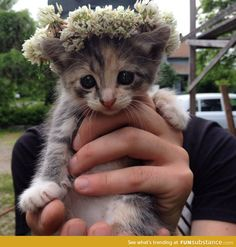 Princess kitten has a crown
