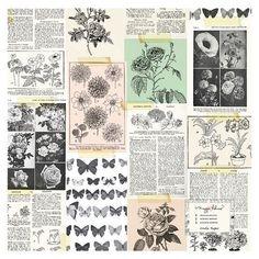 Crate Paper - Flourish Collection - 12 x 12 Acetate Paper - Floribuna