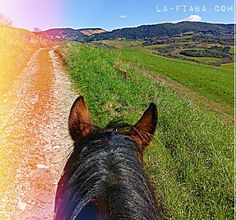 Gorgeous weather for #horseriding in #Tuscany in February!