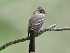 50 Best In Alabama Beautiful - Backyard Birds Birdwatching Images 2012 Birds