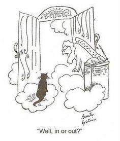 LOL... cats
