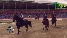 Código Equino Segunda Temporada: La Chalanería en Colombia.
