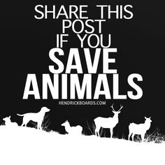 SHARE THIS PIN IF YOU SAVE ANIMALS !!!!!!