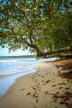 CAHUITA NATIONAL PARK: PHOTO JOURNAL Cahuita National Park, on Costa Rica's Caribbean coast, is home to beautiful beaches, hundreds of bird and mammal species, and a precious underwater ecosystem. With all the wonders of nature in one place, this is an unmissable spot in Costa Rica.