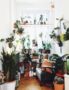 studio {hammel} urban jungle. picture: jules villbrandt  #studiohammel #blumenampel #planthanger #wallhangings