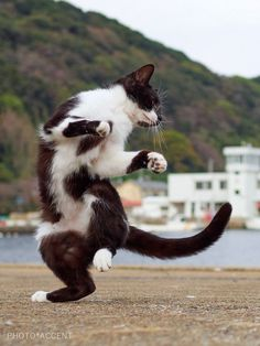 Kung fu. Wow. They can all Kung fu. Awesome! follow back