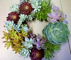 Succulent Wreath Living Succulents Round Perfect Unique Holiday Gift