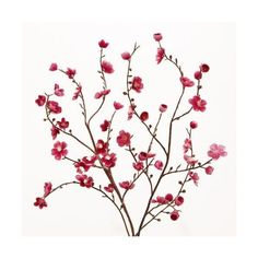 Cost Plus World Market Pink Velvet Plum Blossoms ($16) ❤ liked on Polyvore featuring home, home decor, floral decor, pink, fabric flowers, artificial silk flowers, faux floral, artificial flower stems and fake silk flowers