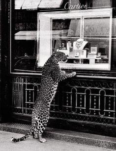 Cartier - @classiquecom