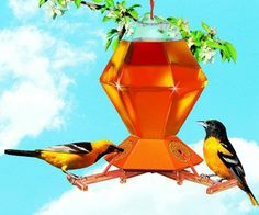 $15.34-$18.29 Deluxe oriole feeder features 3 perch activated bee guard feeding stations to allow orioles and hummingbirds to feed without bees. Bird's weight lowers perch to reveal nectar for feeding. 36 oz. plastic hexagonal bottle with no drip feeding base.