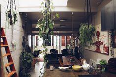 Living with plants (andcats) - desire to inspire - desiretoinspire.net