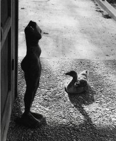 regardintemporel:  André Kertész - Rencontre, Texas, 1959