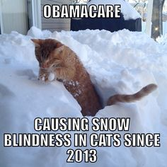 Snow blindness in Cats