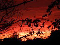 Red skies in my NC backyard