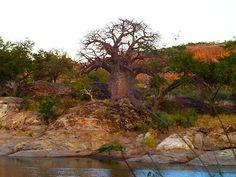 Tuli Block, Botswana