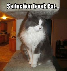 seduction level cat/// Oh, how accurate this is....cats know how to do this, par excellence.....