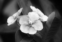 26 best pictures of flowers in black amp white images
