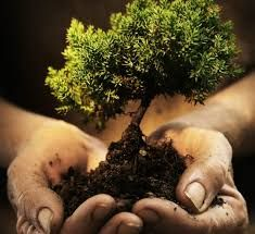 """""""The best time to plant a tree was 20 years ago. The second best time is now."""" - Chinese Proverb"""