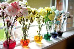 colorful-carnations.jpg 1,600×1,066 pixels