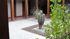 cactus . - © ontzia