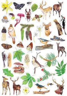 illustrated woodland creatures