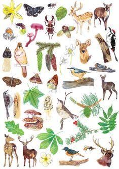 illustrated woodland creatures