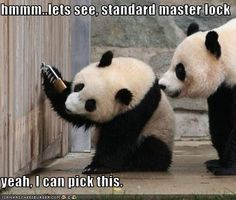 sily panda pictures on facebook | Pandas, Lightsabers and Cameras, oh my: Funny Panda Pictures
