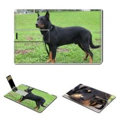 8GB USB Flash Drive USB 2.0 Memory Stick The Beauceron Credit Card Size Customized Support Services Ready gift ideas Beaucerons Puppy Puppies Dog Dogs Human Friend Friends Animal Pet,$19.99