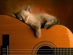 Cute Kitten Sleeping On A Guitar. Both are important!