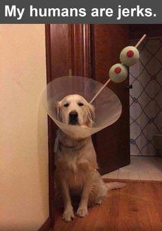 Martini Dog Funny Joke Pictures