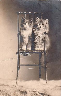 Cats in Photography: E.D. Puntam - Chums. Photo. Circa Late-19th Century.