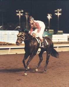 Corona Chick(1989)Chicks Beduino- Sizzlin Lil By Sizzle Te. 5x5 To Nasrullah. 1/2 Sister To Corona Kool. 18 Starts 15 Wins 2 Seconds. $591,326. Won Ed Burke Futurity(G1), Kindergarten Futurity(G1), Dash For Cash Futurity(G1), Governor's Cup Derby(G1R), Governor's Cup Futurity(G2R), 2nd Southern California Derby(G2).