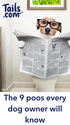 Life with your dog can be full of surprises, like that one you found behind the sofa when you only nipped out to the shops for an hour. 💩  When it comes down to poo, us dog owners have seen it all. Meet the 9 poos you'll have picked up at some point in your dog's life.  Click the pin to read more...   Tails provide tailored dog food to dog lovers and their pooches in the UK.  #Dogs #DogPoop #DogOwnerTips #DogFunny #DogLove Funny Dogs, Cute Dogs, Funny Animals, Dog Nutrition, Nutrition Guide, Big Dog Little Dog, Dog Health Tips, Dog Pin, Cute Animal Pictures