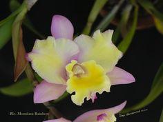 Flower design -Orchid