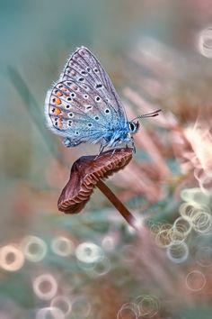 Butterfly on mushroom. Beautiful Bugs, Beautiful Butterflies, Amazing Nature, Beautiful World, Beautiful Pictures, Papillon Butterfly, Butterfly Kisses, Butterfly Flowers, Blue Butterfly