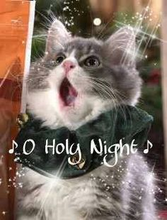 HE'S IN THE CHOIR AT THE FIRST FELINE NATIONAL KENNAL……WE ALL KEPT OUR FINGERS…