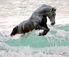22 meilleures images du tableau cheval qui saute equestrian country fences et horse - Frison qui saute ...