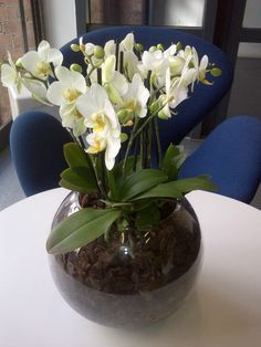 Orchids to brighten up the office environment.  Phalaenopsis orchids in glass bowl creating a simple, elegant display