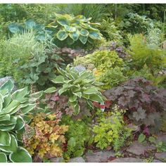 Traditional Perennial - traditional - landscape - vancouver - Glenna Partridge Garden Design