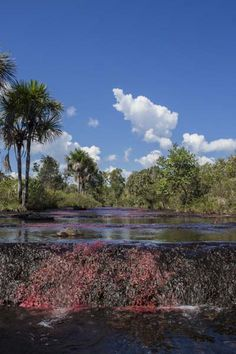 Vive un experiencia única en caño cristales. Come visit the most beautiful river in the world. #cañocristales #turismoalternativo #riodecolombia