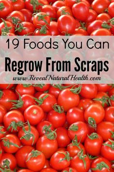 Here are 19 foods you will be surprised to learn you can regrow simply from scraps.