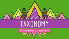 Taxonomy: Life's Filing System - Crash Course Biology Hank tells us the background story and explains the importance of the science of classifying living things, also known as taxonomy. Biology Lessons, Ap Biology, Science Lessons, Life Science, Science Videos, Plant Science, Science Classroom, Teaching Science, Classroom Resources