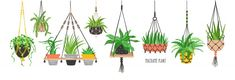 Set of macrame hangers for plants growing in pots. Bundle of hanging planters ma. Set of macrame hangers for plants growing in pots. Bundle of hanging planters made of cotton cord, Handmade Home, House Illustration, Plant Illustration, Graphic Illustration, Macrame Hanging Planter, Hanging Planters, Xmas Crafts, Decor Crafts, Craft Decorations