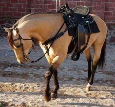Beautiful horse love the tack and it's so clean and pretty buttermilk buckskin horse Horses And Dogs, Cute Horses, Horse Love, Wild Horses, Black Horses, All The Pretty Horses, Beautiful Horses, Animals Beautiful, Cute Animals