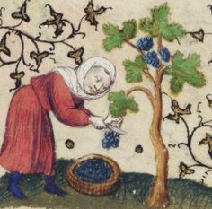 A woman cuts grapes from a vine and collects them in a basket. This is one of the labors of the months used for September, the time of year at which grapes are harvested.