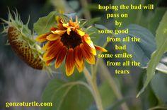 #gonzoturtle #poem #poetry #life #art #ReadThinkEvolve #meme gonzoturtle.com