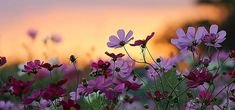 Beautiful flowers scenery background
