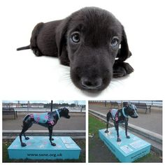 """Artlist Collection THE DOG — The """"Black Dog"""" campaign goal is to reduce the stigma surrounding mental illness. Several design statues are displayed in various places to raise awareness. Suffering In Silence, Counselling, Mental Illness, Art World, Statues, Pet Dogs, Goal, Campaign, Places"""